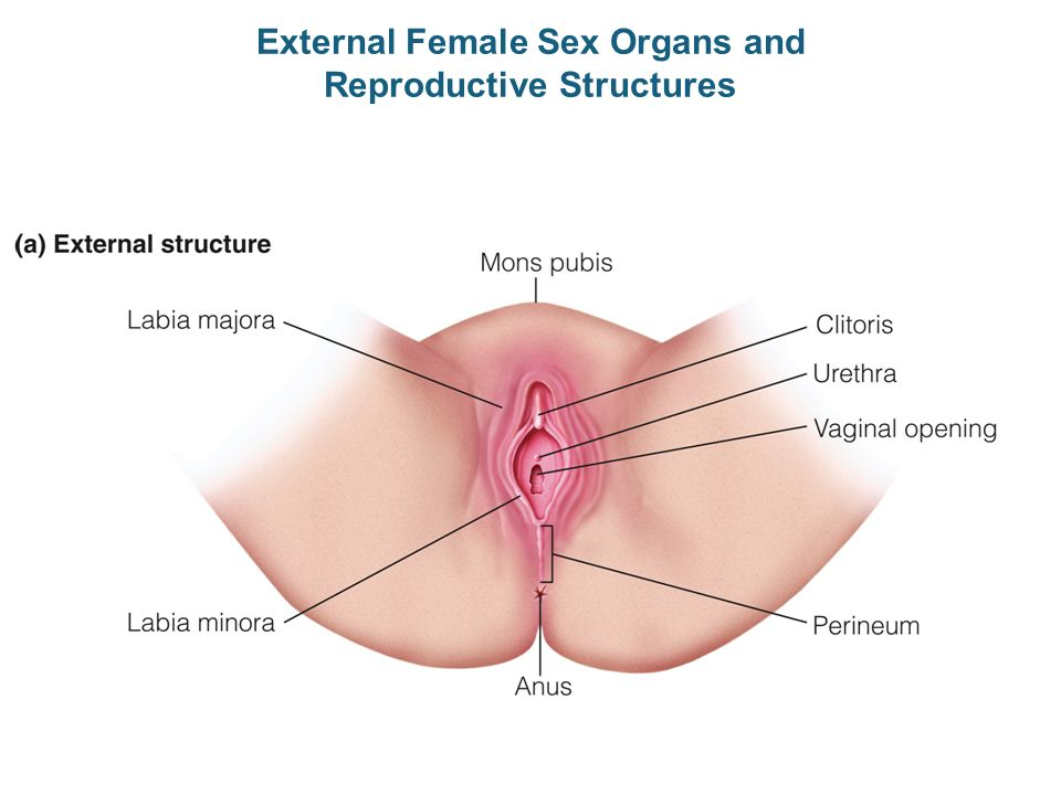 Dating with no sexual organs